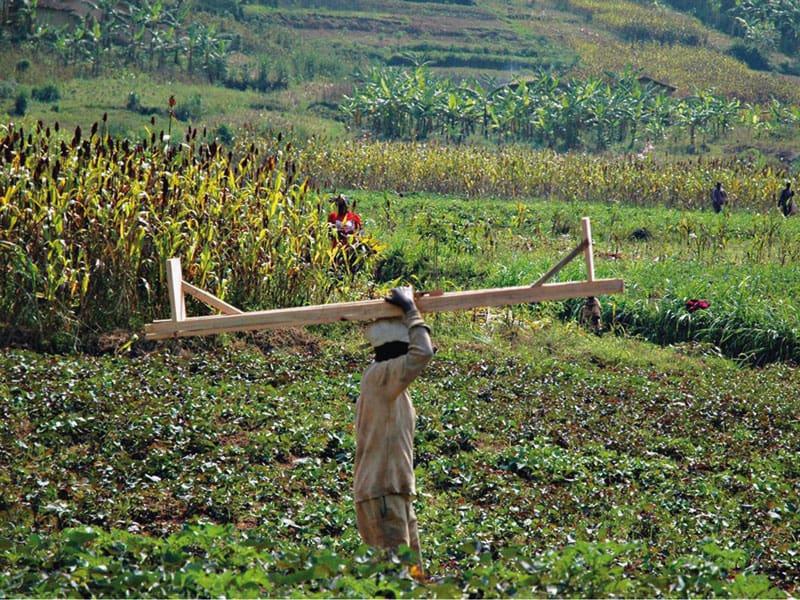 Il caffè pregiato del Ruanda: la riscossa dell'Africa